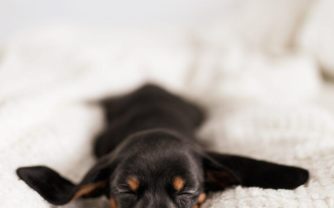 Klassische Massage beim Hund: