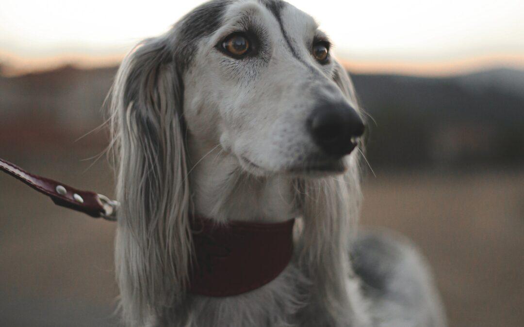 Fellwechsel beim Hund: