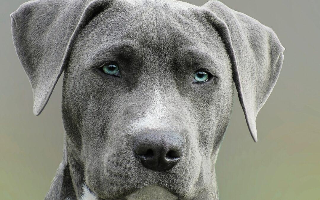 Sodbrennen beim Hund: