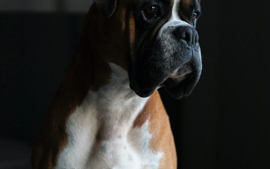 CytoCluster-Diagnose- und Therapiemethode beim Hund und Pferd